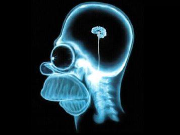 homer-brain1
