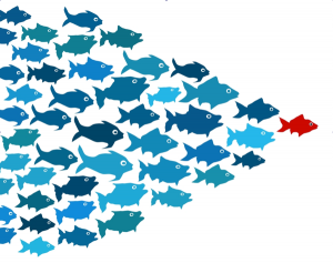 Fish-leadership-300x237
